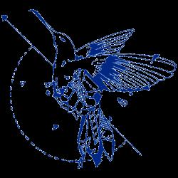 Vinilo furgoneta camper colibrí geométrico