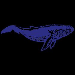 Vinilo furgoneta camper ballena